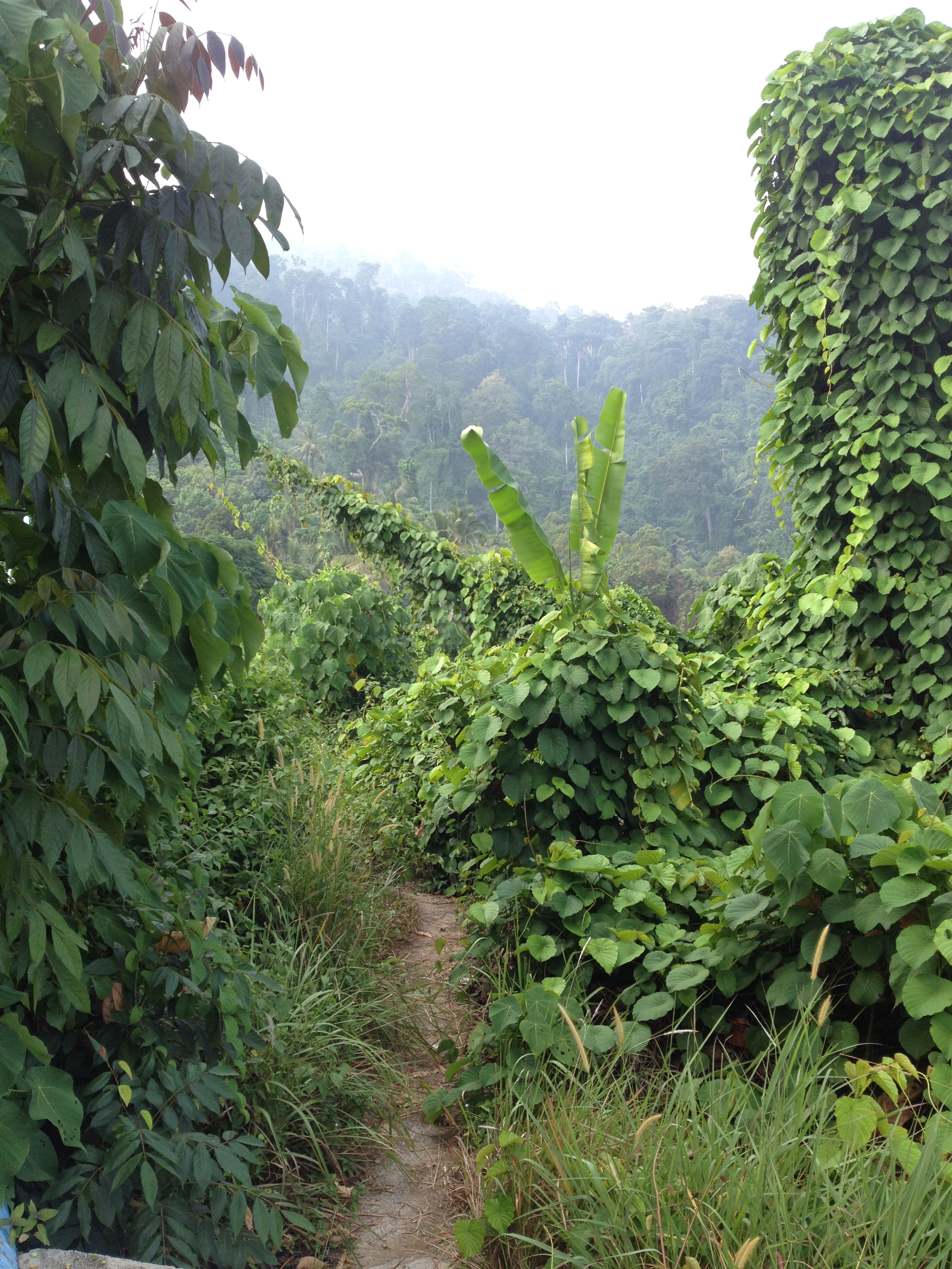 Trail into jungle path of Tekek to Juara