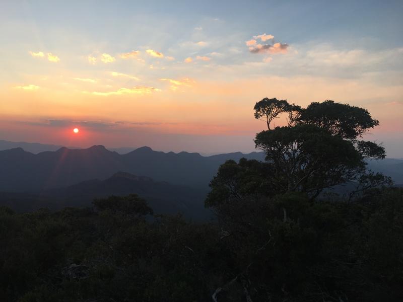 Sunset in the Jungle in Australia.