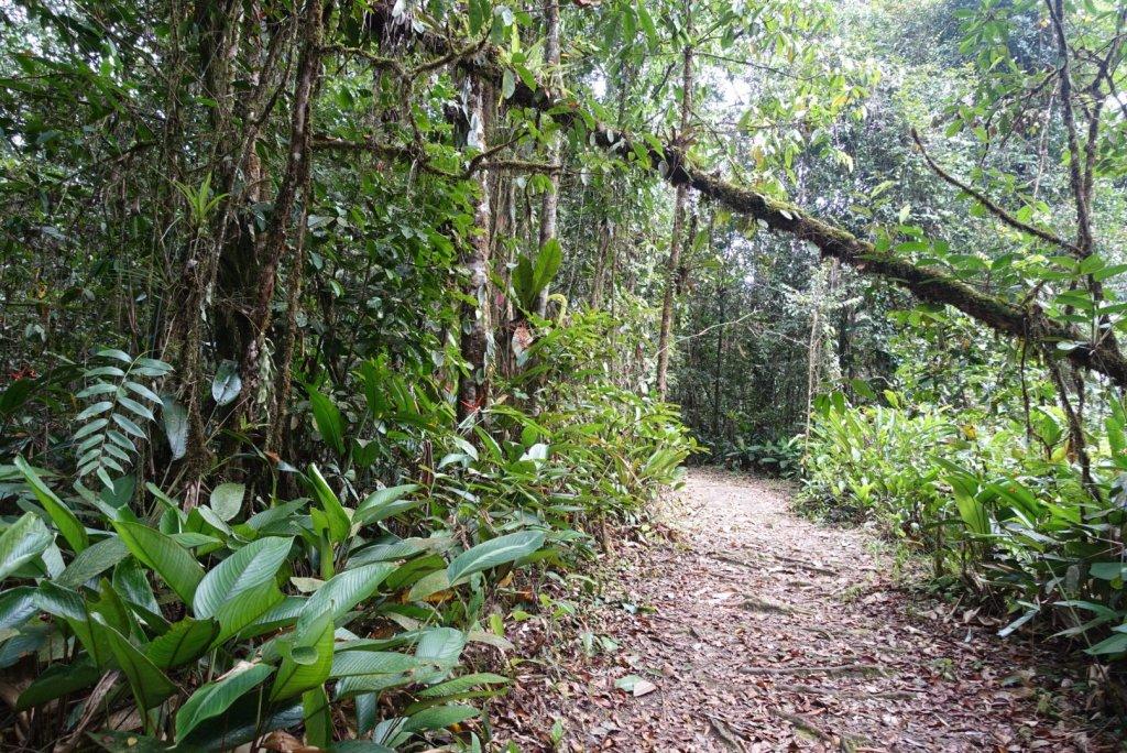 Path into a jungle